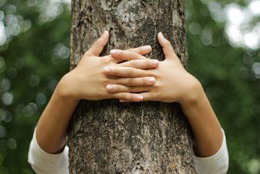 abbracciare gli alberi
