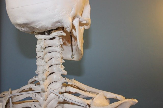 scheletro bianco meditazione